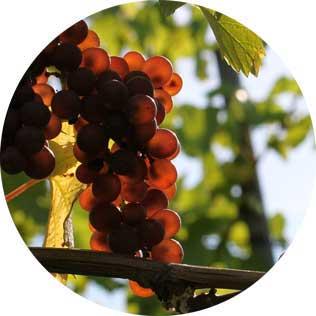 Shop System für Weingut Befort von spooo design